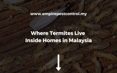 Where Termites Live Inside Homesin Malaysia