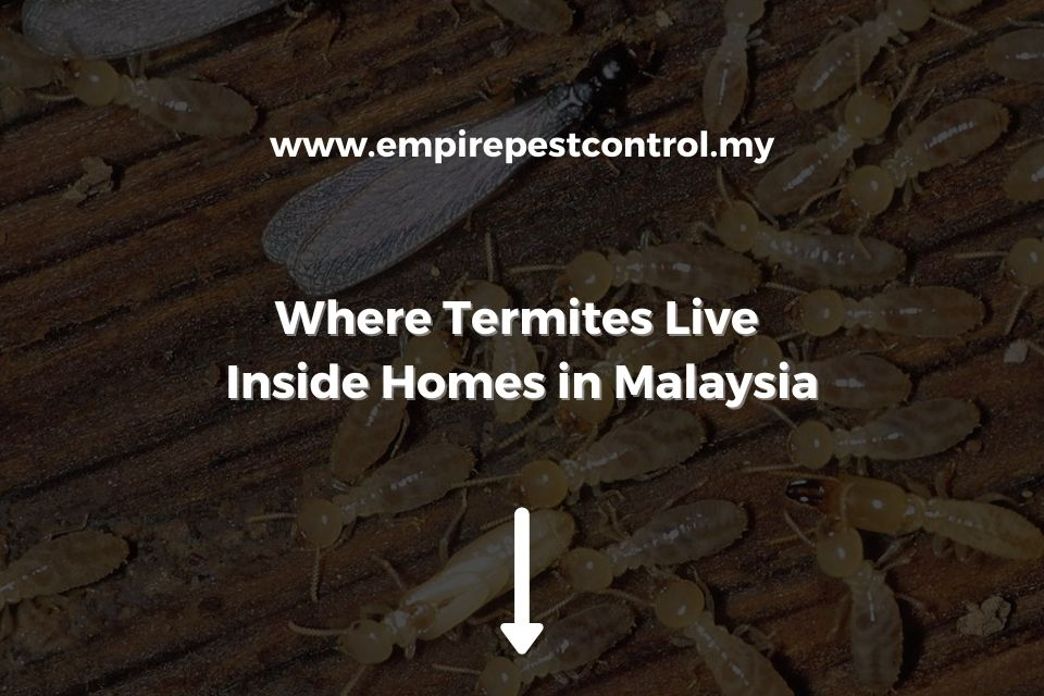 Where Termites Live Inside Homes in Malaysia