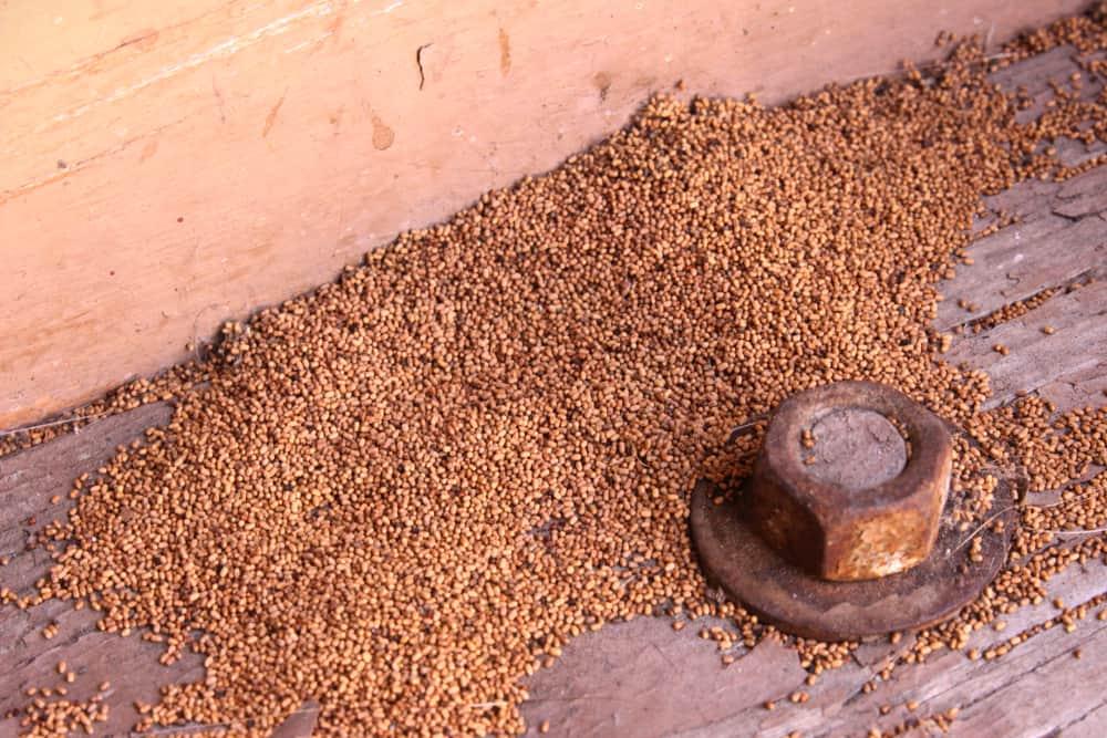 termite-droppings
