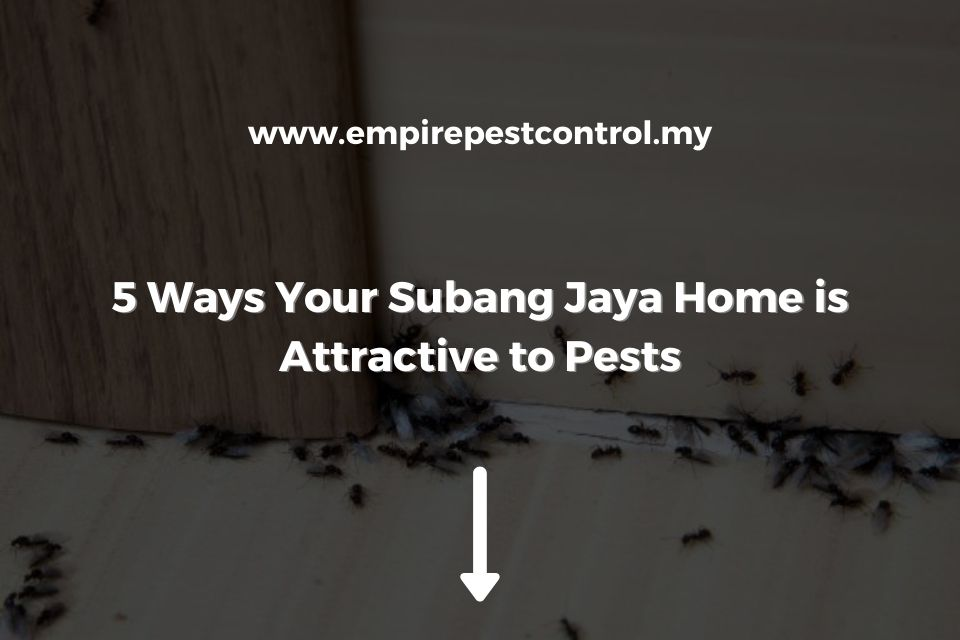 5 Ways Your Subang Jaya Home is Attractive to Pests