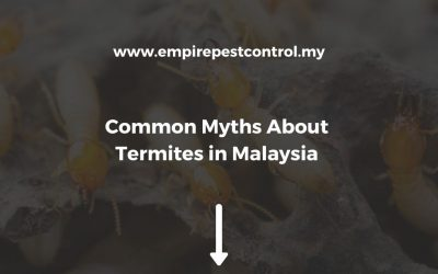 Common Myths About Termites in Malaysia You May Still Believe