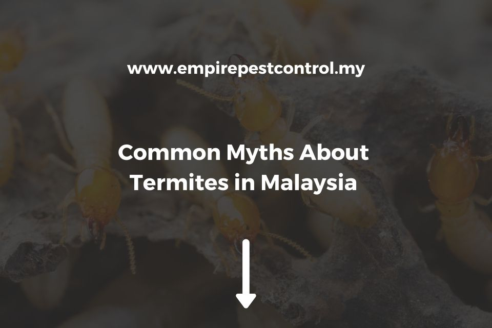 Common Myths About Termites in Malaysia