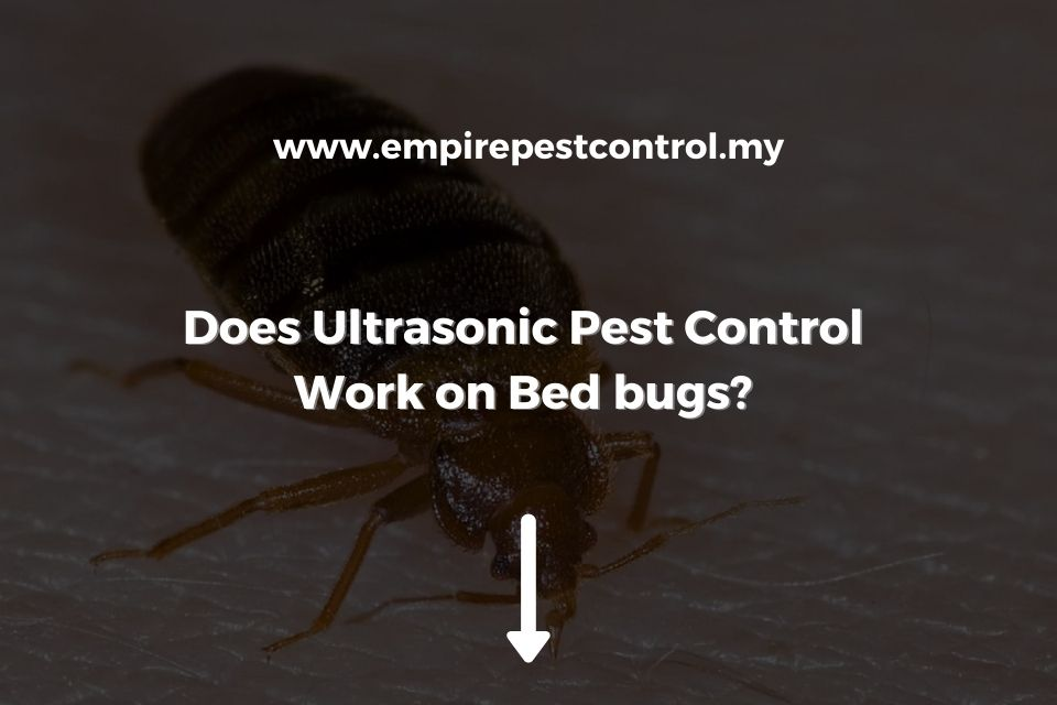 Does Ultrasonic Pest Control Work on Bed Bugs