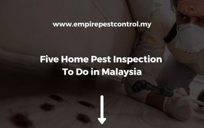 Five Home Pest Inspection To Do in Malaysia