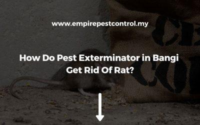 How Do Pest Exterminator in Bangi Get Rid Of Rat?