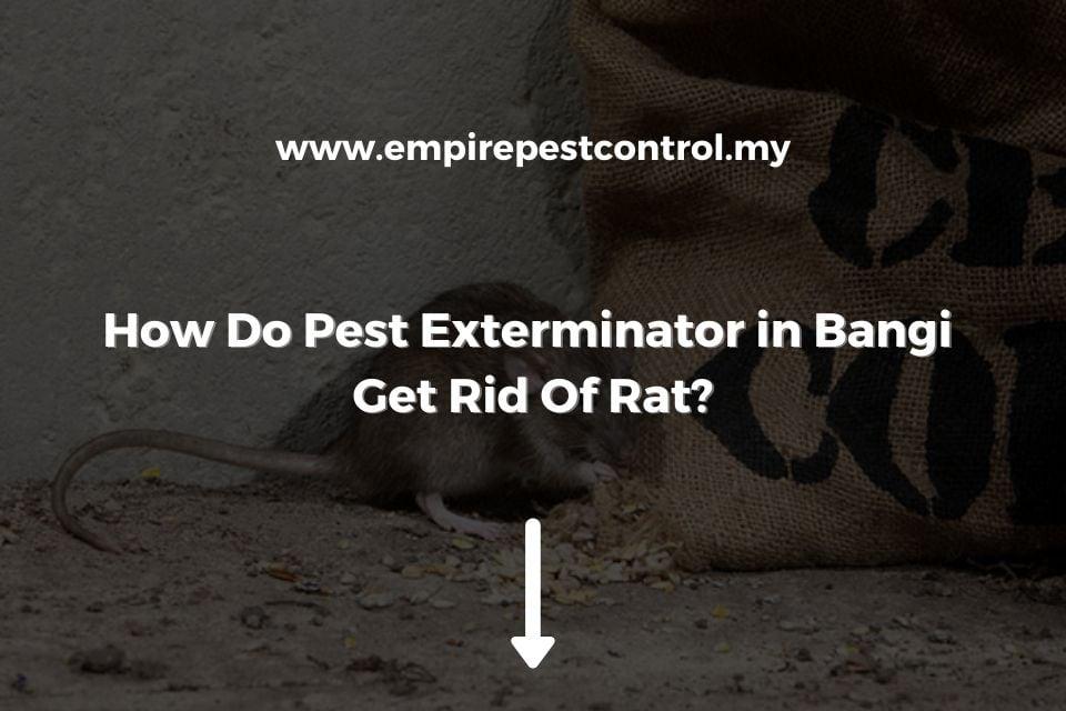 How Do Pest Exterminator in Bangi Get Rid Of Rat