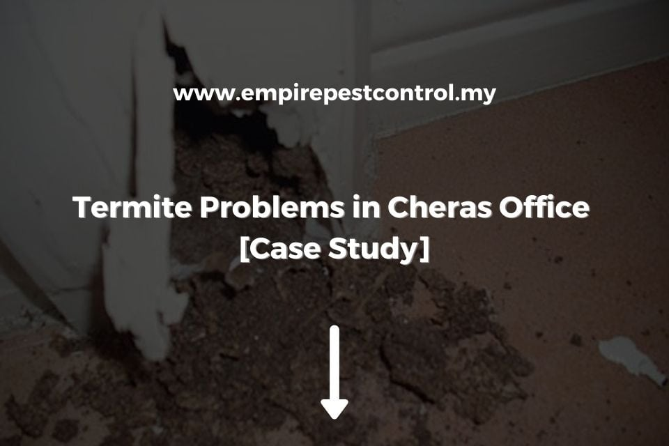 Termite Problems in Cheras Office
