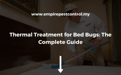 Thermal Treatment for Bed Bugs: The Complete Guide
