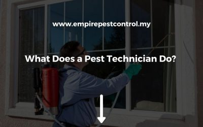What Does a Pest Technician Do?