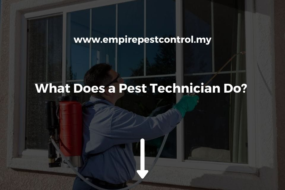 What Does a Pest Technician Do