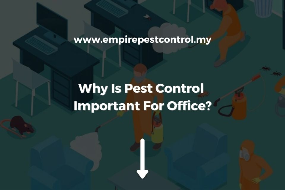 Why Is Pest Control Important For Office