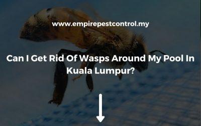 Can I Get Rid Of Wasps Around My Pool In Kuala Lumpur?
