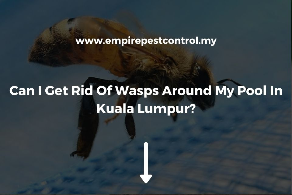 Can I Get Rid Of Wasps Around My Pool In Kuala Lumpur