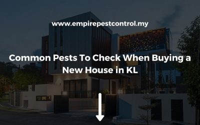 3 Pests To Check For When Purchasing a New Home in Kuala Lumpur