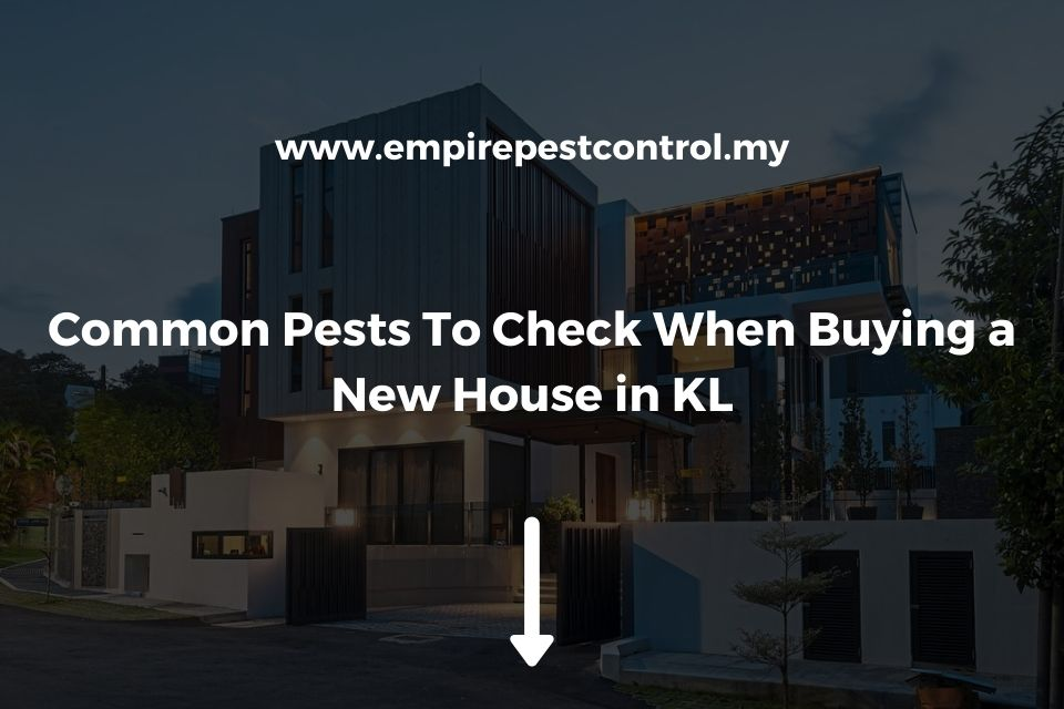 Common Pests To Check When Buying a New House in KL