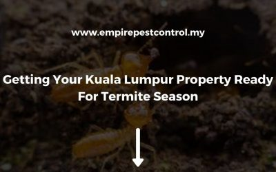 Getting Your Kuala Lumpur Property Ready For Termite Season