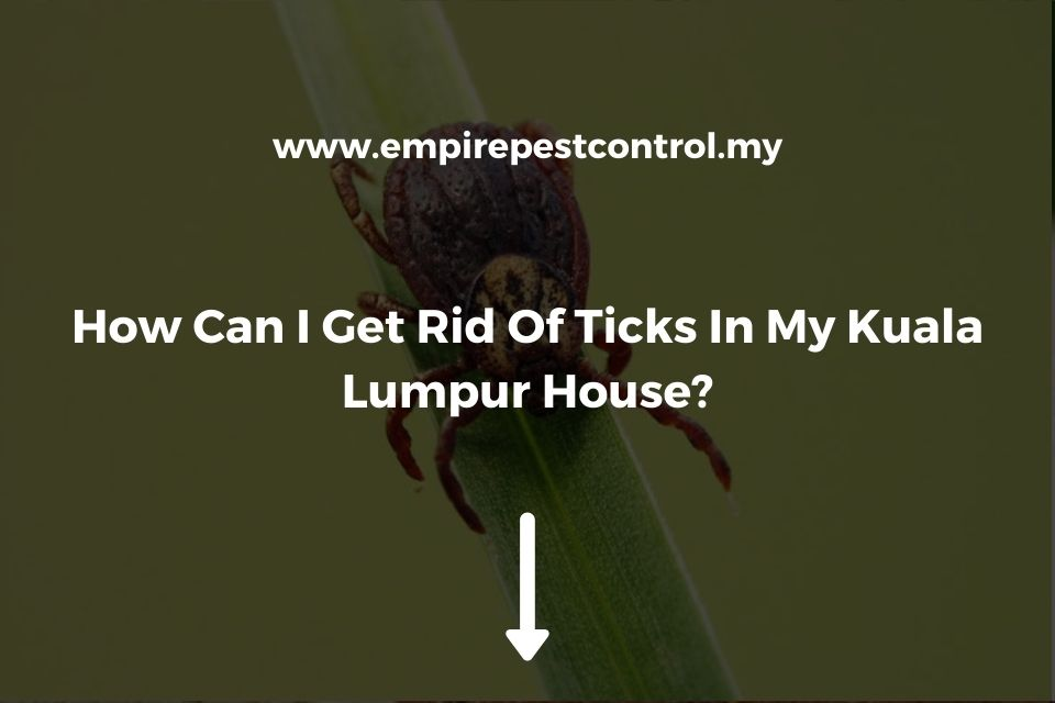 How Can I Get Rid Of Ticks In My Kuala Lumpur House