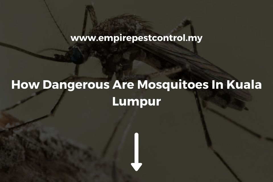 How Dangerous Are Mosquitoes In Kuala Lumpur