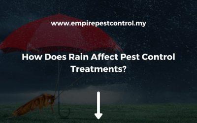 How Does Rain Affect Pest Control Treatments?