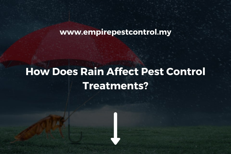 How Does Rain Affect Pest Control Treatments?