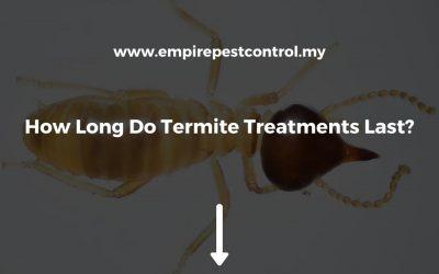 How Long Do Termite Treatments Last?