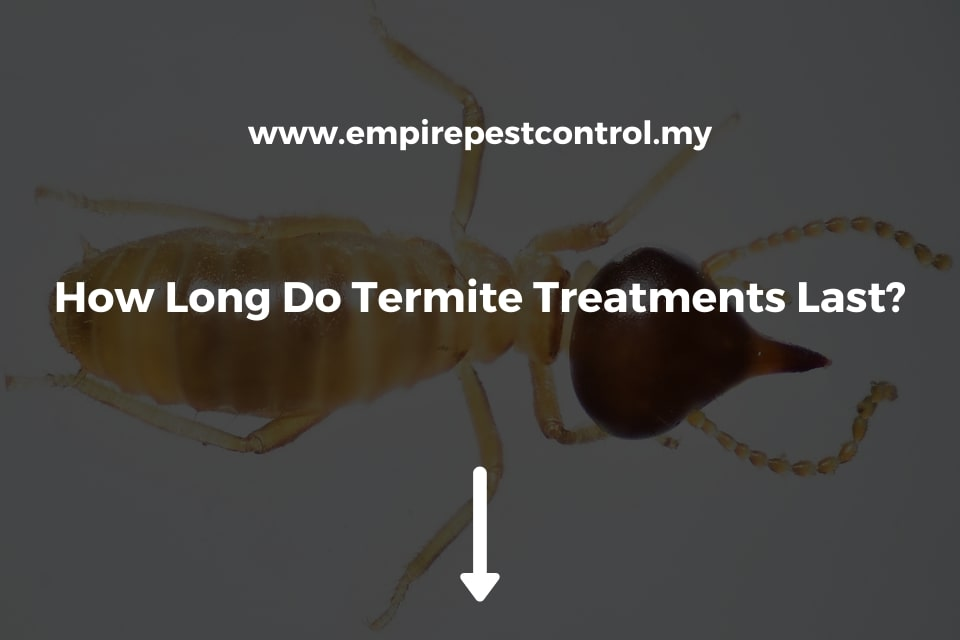 How Long Do Termite Treatments Last?