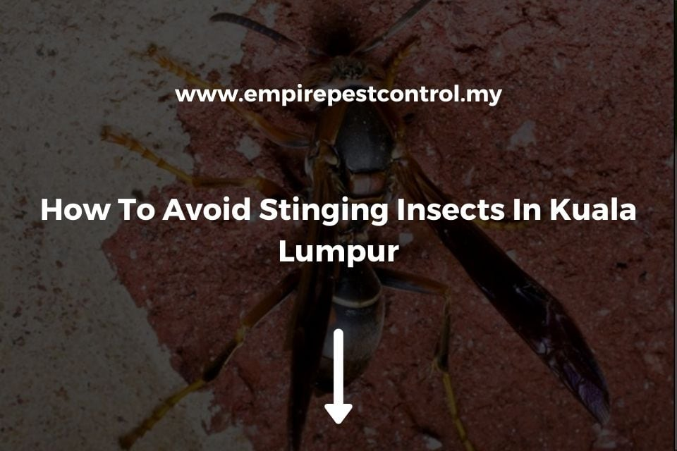 How To Avoid Stinging Insects In Kuala Lumpur