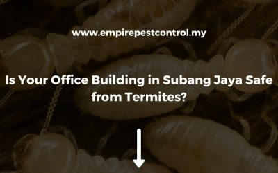 Is Your Office Building in Subang Jaya Safe from Termites?