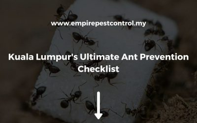 Kuala Lumpur's Ultimate Ant Prevention Checklist