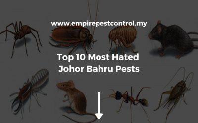 Top 10 Most Hated Johor Bahru Pests