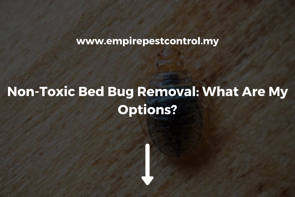 Non-Toxic Bed Bug Removal: What Are My Options?