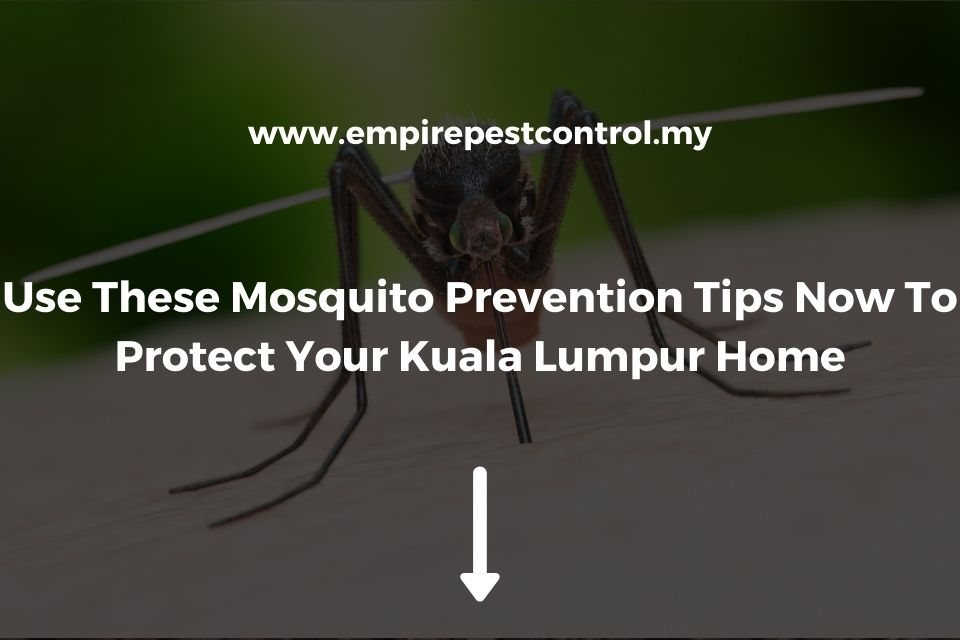 Use These Mosquito Prevention Tips Now To Protect Your Kuala Lumpur Home