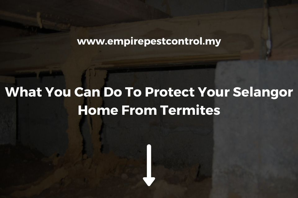 What You Can Do To Protect Your Selangor Home From Termites