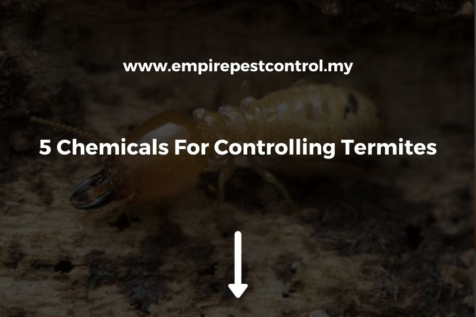 5 Chemicals For Controlling Termites