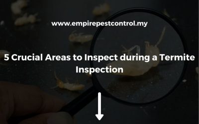 5 Crucial Areas to Inspect During a Termite Inspection