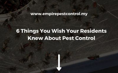 6 Things You Wish Your Residents Knew About Pest Control