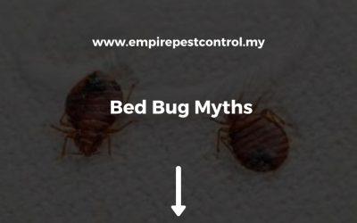 Bed Bug Myths
