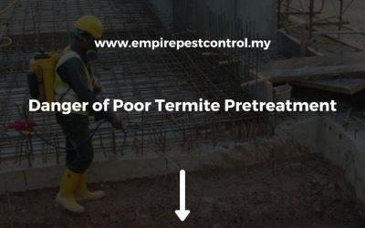 Danger of Poor Termite Pretreatment