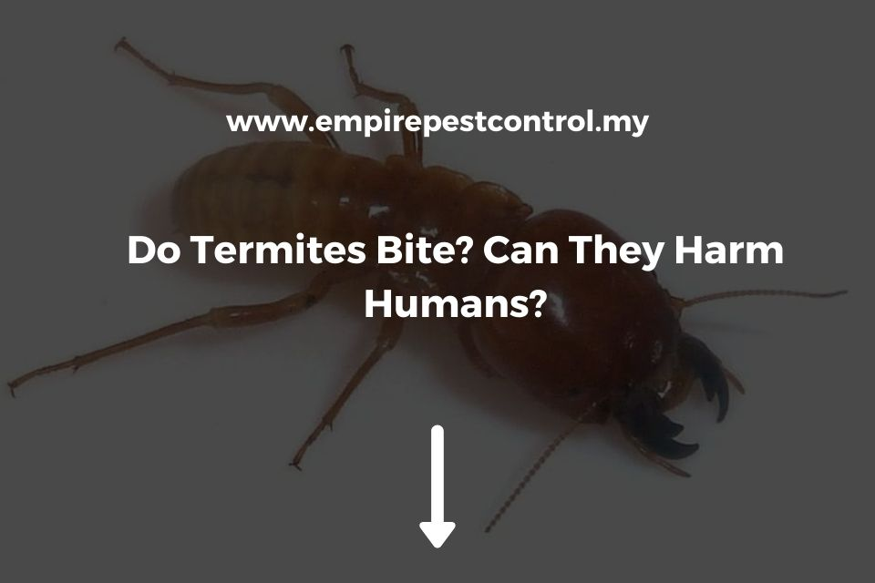 Do Termites Bite? Can They Harm Humans?