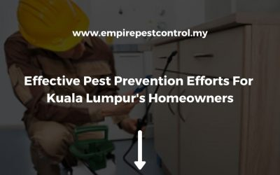 The 3 Most Effective Pest Prevention Efforts For Kuala Lumpur's Homeowners