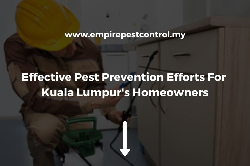 Effective Pest Prevention Efforts For KL Homeowners