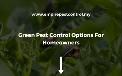Green Pest Control Option For Homeowners