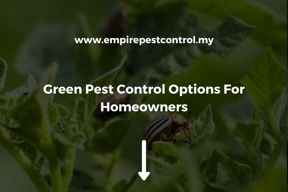 Green Pest Control Options For Homeowners
