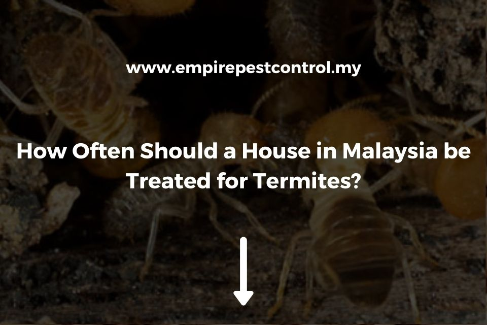 How Often Should a House in Malaysia be Treated for Termites?
