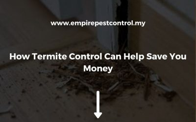 How Termite Control Can Help Save You Money