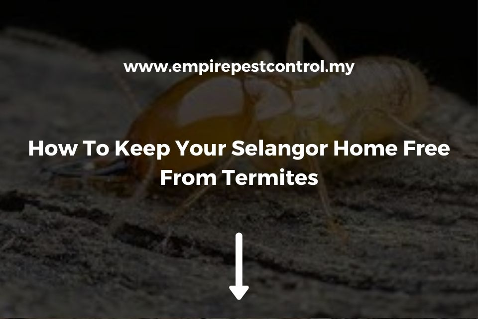 How To Keep Your Selangor Home Free From Termites