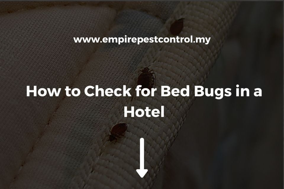 How to Check for Bed Bugs in a Hotel