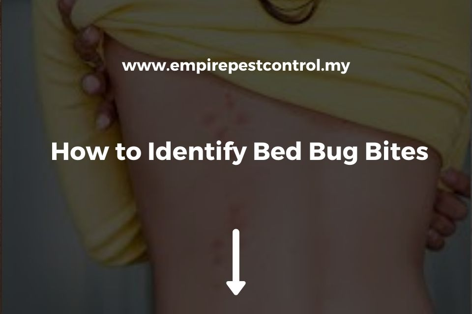 How to Identify Bed Bug Bites
