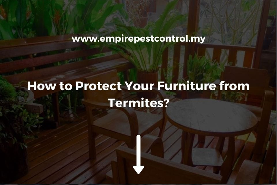How to Protect Your Furniture from Termites?