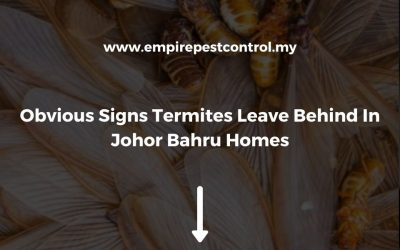 Obvious Signs Termites Leave Behind In Johor Bahru Homes